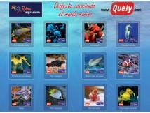 Palma Aquarium y Quely alegran el verano de los niños de Baleares con los